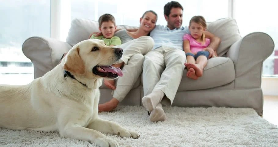 Cute Family Relaxing Together On The Couch With Their