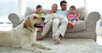 Cute Family Relaxing Together On The Couch With Their ...