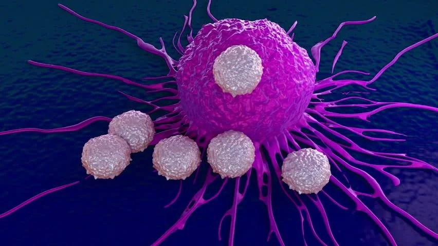 Shutterstock Hd Wallpapers T Cells Attacking Cancer Cell Illustration Of Microscopic