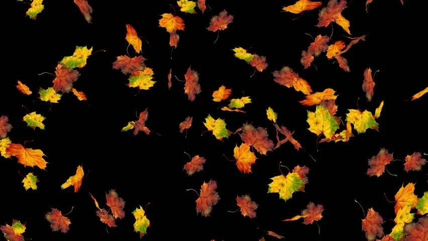 3d Falling Leaves Animated Wallpaper Free Download Autumn Leaves Spurt 8 Alpha Animated Transition Of