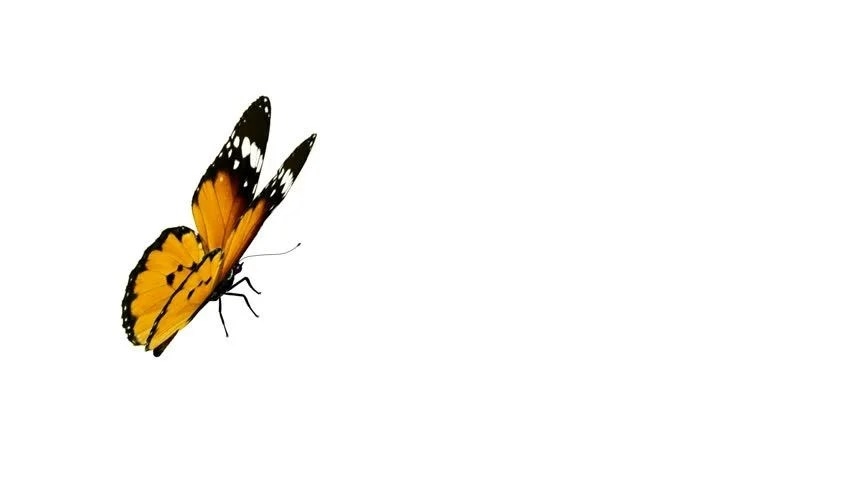 Flying Butterfly Animated