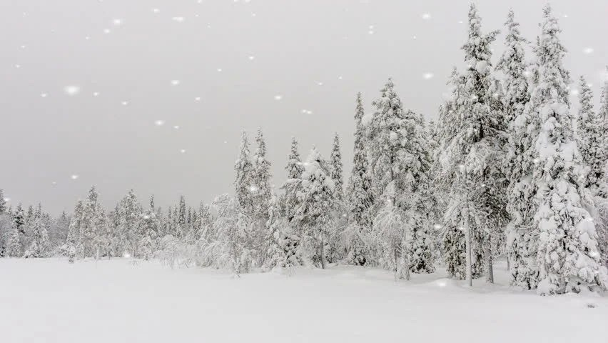 Winter Landscape Under Falling Snow With Delicate Snowflakes Floating Down Through The Air Onto A Snow Covered Pine Forest Stock Footage Video ...