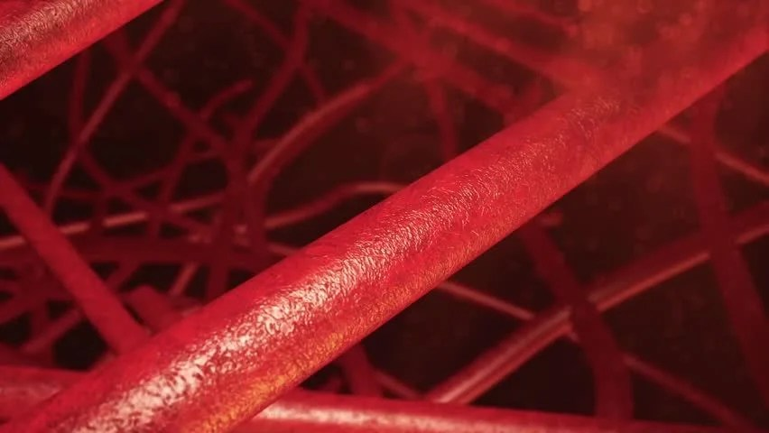 The Flow Of Blood Erythrocytes Stock Footage Video 4336868 ...