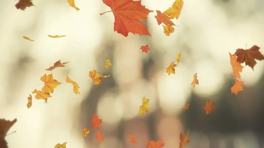 Fall Leaves Clip Art Wallpaper Falling Leaves Blowing In The Wind 03 Looped And Masked