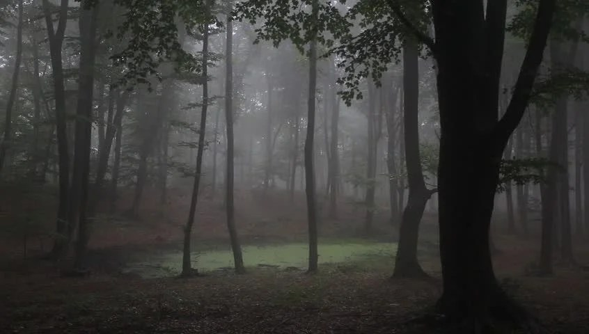 Spooky Fall Wallpaper Foggy Forest With Rain Drops Sound Stock Footage Video