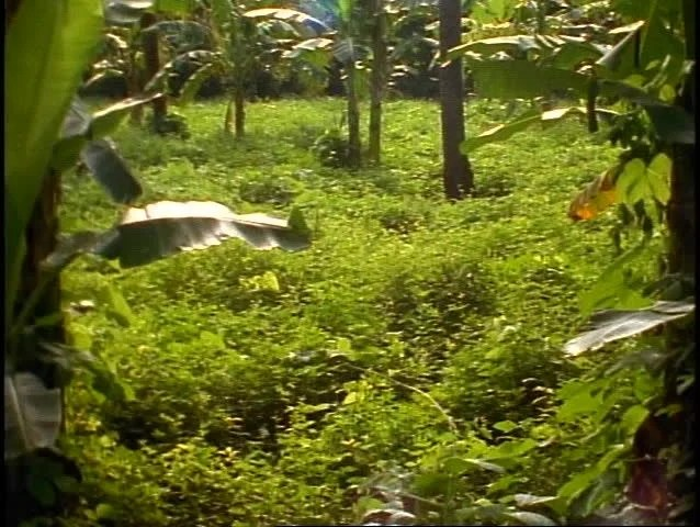 Bali, Rice Fields In Jungle, Lush, Green, Blue Pools Of