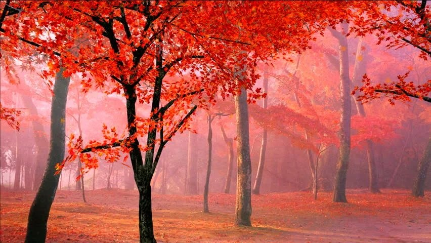Fall Foliage Wallpaper Widescreen 1 Jpg