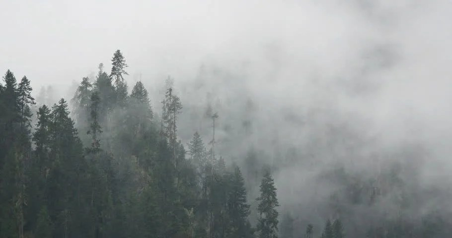 Fall Mist Wallpaper Timelapse Of Misty Fog Blowing Over Mountain With Pine