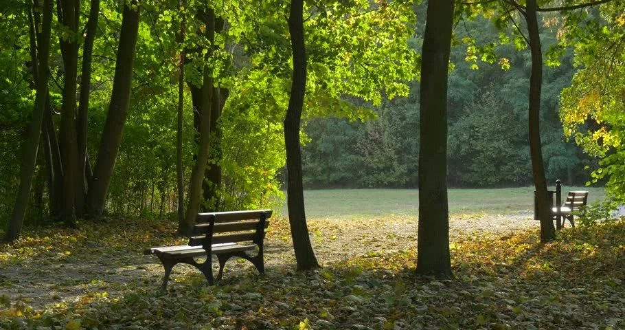 Image result for field of fallen leaves