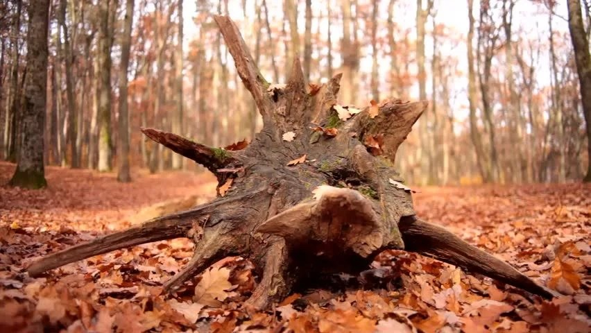 Image result for shutterstock image of a tree stump