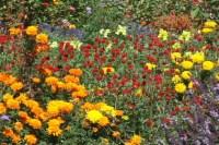 SD Autumn Flower Garden Stock Footage Video 74455 ...