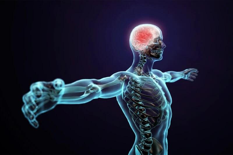 Merkezi Sinir Sistemi (CNS)