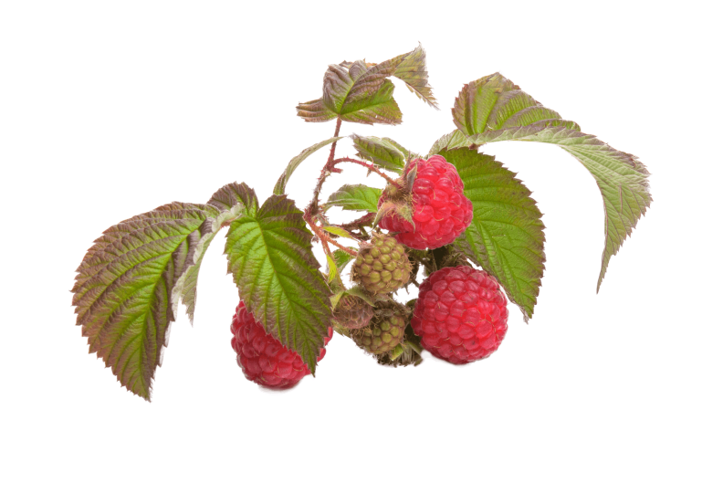 raspberry-fruit-red-45903.png