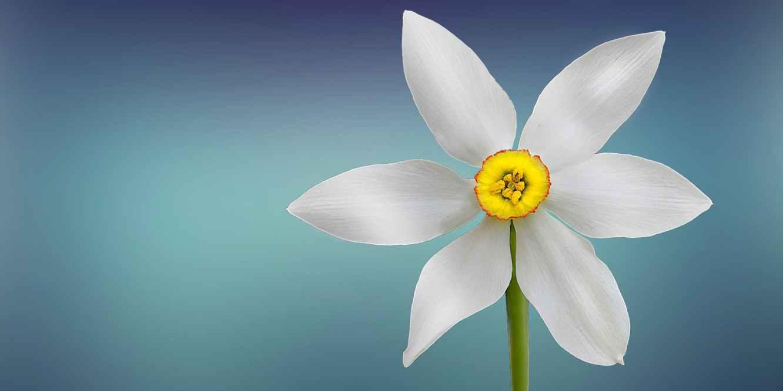 Flowers Chinese Herb Menopause