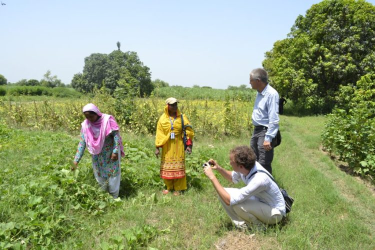 Kitchen Gardening Rahim Yar Khan Punjab 2013