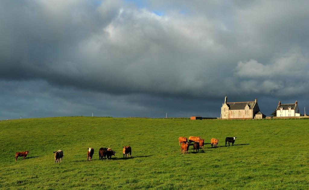 I verdi pascoli dell'ABERDEENSHIRE nella Scozia orientale