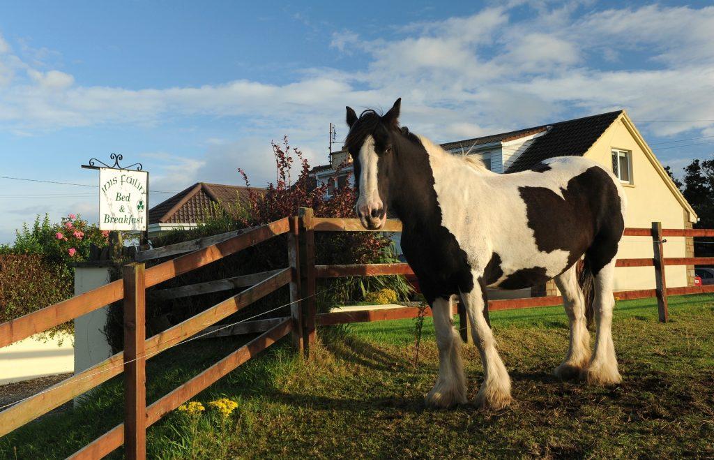 """Il cavallo """"di casa"""""""