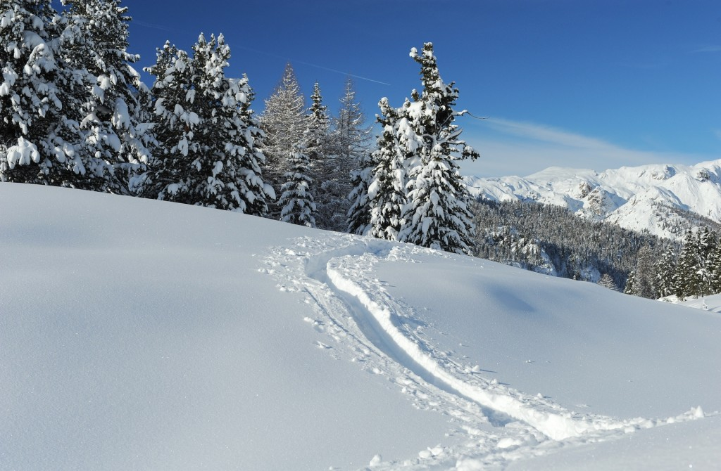 L'incanto di un manto candido di neve fresca...