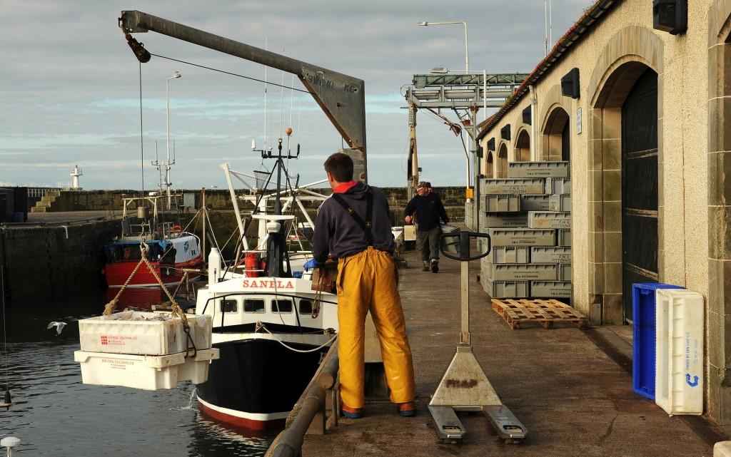 Le attività del mattino nel porto di PITTENWEEM