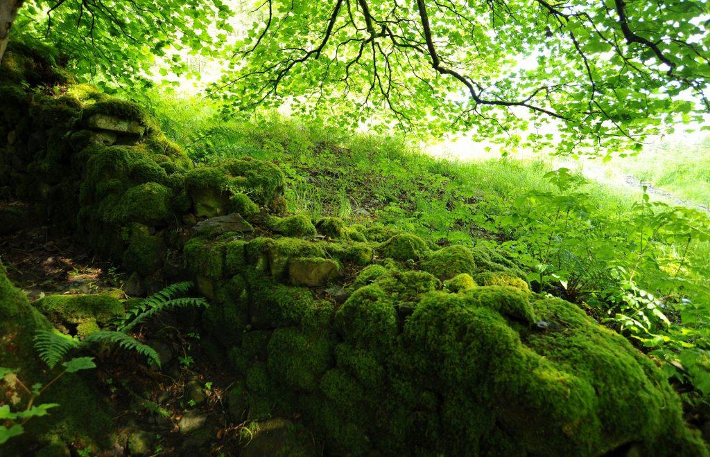 Uno scorcio nel bosco