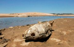 The skelatel remains of a fish are seen along the banks of Folsom Lake near Folsom, Calif., Thursday, Sept. 4, 2008.(AP Photo/Rich Pedroncelli)