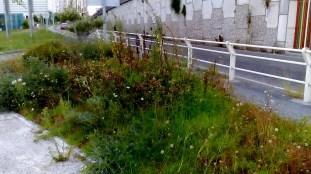 ilcanallarubens_navia emporcada_03_2016_Vigo