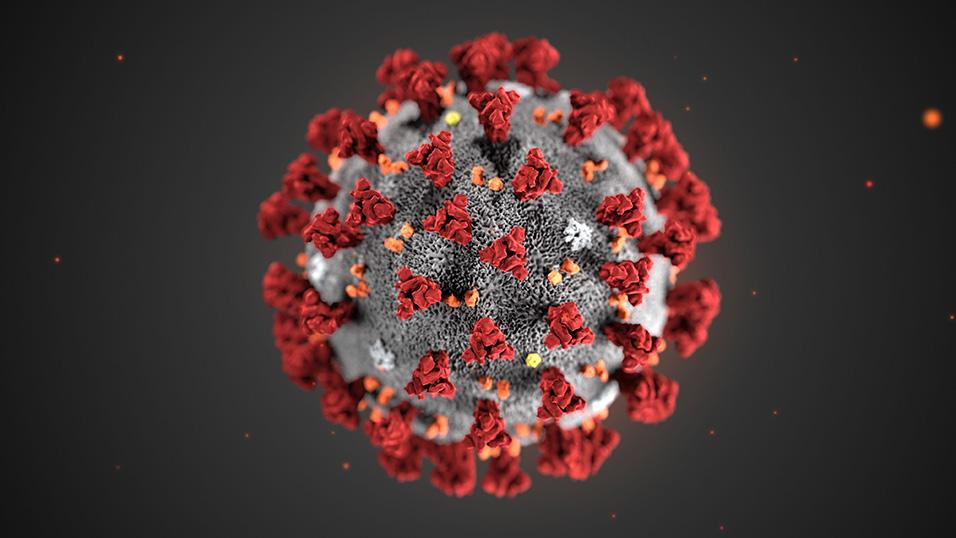 Virus Corona: nemico e alleato