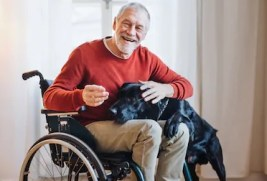 Senior man in wheelchair, smiling. Black Labrador service dog standing, with his head on man's lap, as he pets him.