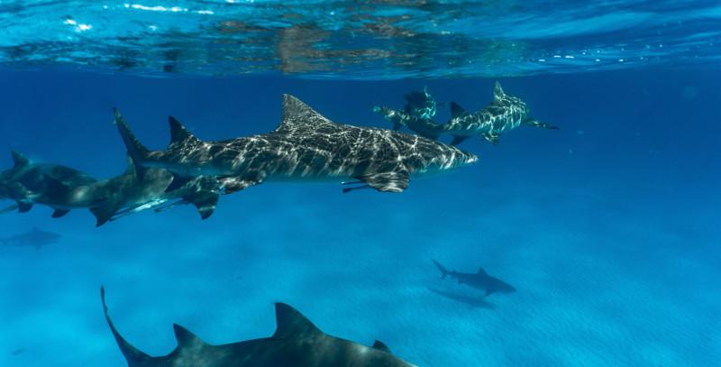 Risque requins