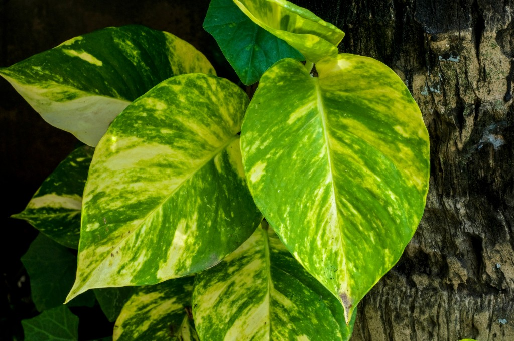 Yellow Plants House