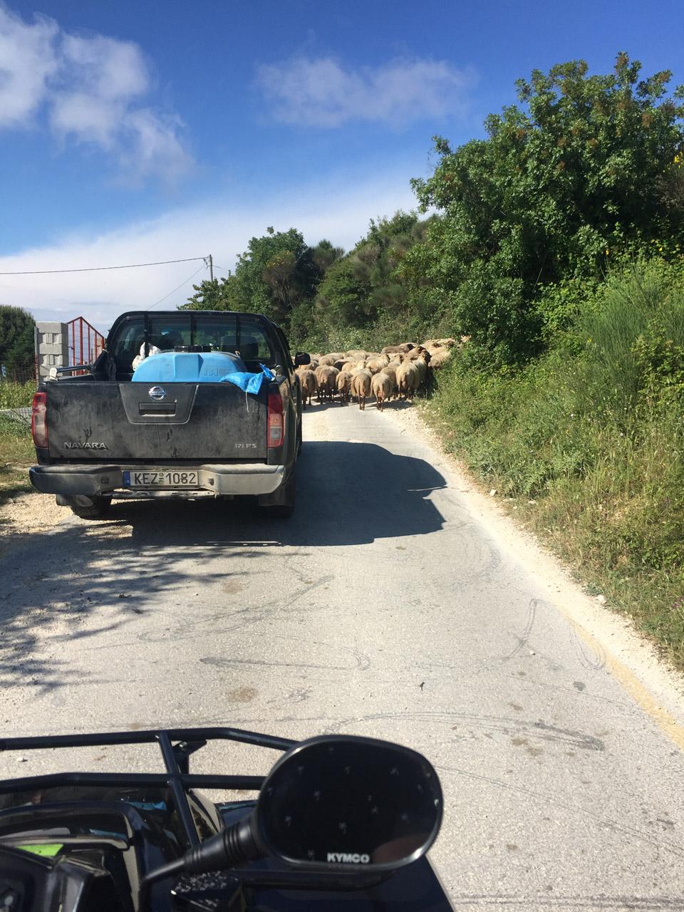 Sur la route d'Assos - Road trip en cephalonie par il etait une veggie