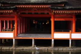 P1190279_itsukushima_jinja