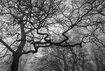 Image of tree @shokijay shot on ILFORD XP2s film