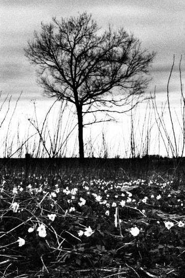 Black and white landscape shot on Ilford Delta 3200