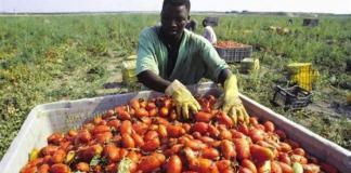 Regolamentazione braccianti agricoli, l'appello di Papa Francesco