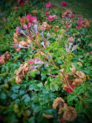 Aufbäumen gehört ebenfalls zur Herbstzeit