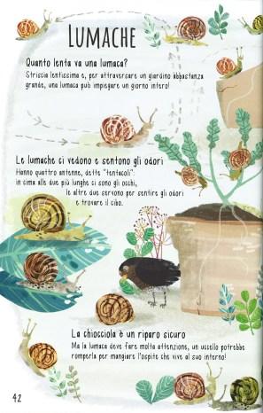 Il libro degli insetti_interno 2