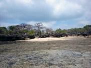 baobab sulla costa