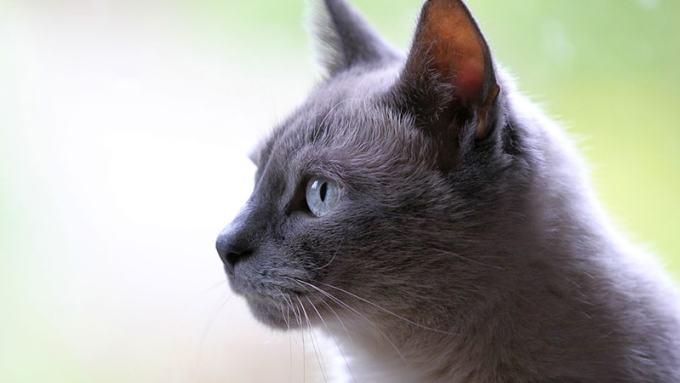 1001 Nama Untuk Kucing Piaraan Yang Lucu Dan Unik Lengkap