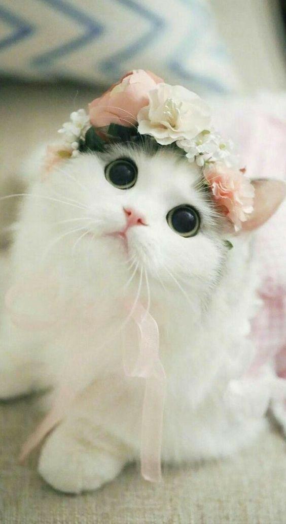 صور قطط جميلة Wallpapers-for-mobile-cats