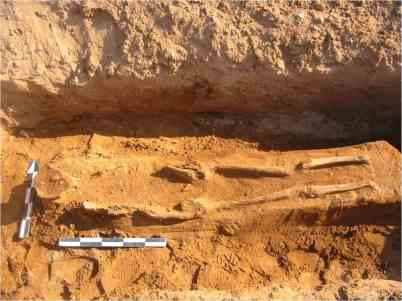 Στο Βαρθολομιό, εντός αγροτεμαχίου ιδιοκτησίας Κ-Η. Ι. Παναγιωτόπουλου, στον κηρυγμένο αρχαιολογικό χώρο (θέση «Τραγάνι») ερευνήθηκαν περίπου 80 κιβωτιόσχημοι τάφοι, κυρίως της ύστερης αρχαιότητος (5ος-6ος αι. μ.Χ.), οι οποίοι ανήκουν σε τύμβο.