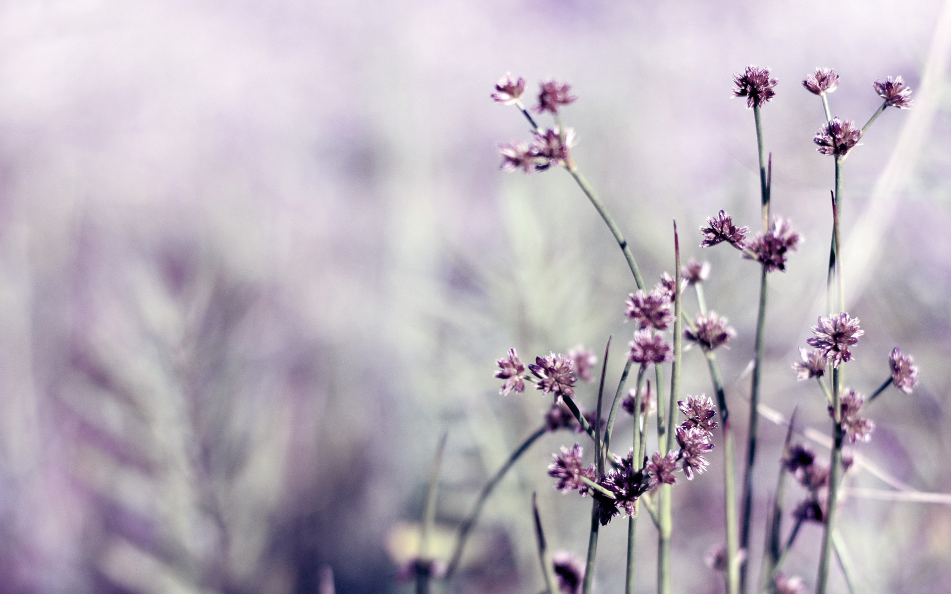 Daily Wallpaper Little Purple Flowers  I Like To Waste