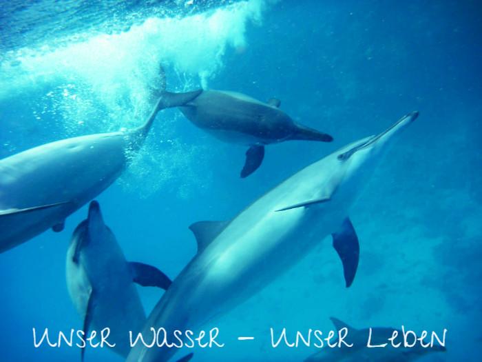 Channeling und Vortrag zum Thema Wasser – 28.06.2017