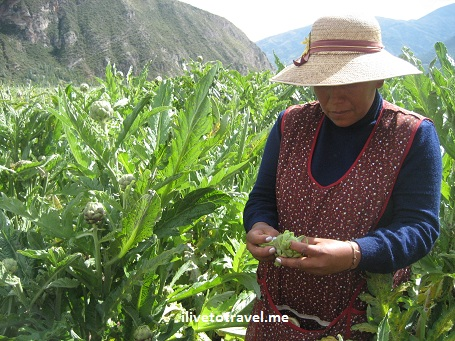 Artichoke farmer in Urcos, in the Cusco (Cuzco) region of Peru