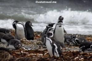 Oway, penguins, pingüinos, Chile, Patagonia, nature, beauty, Canon EOS Rebel