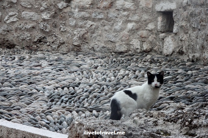 Mostar, Bosnia, bridge, Balkan War, Neretva, photo, travel, explore, cat, gato