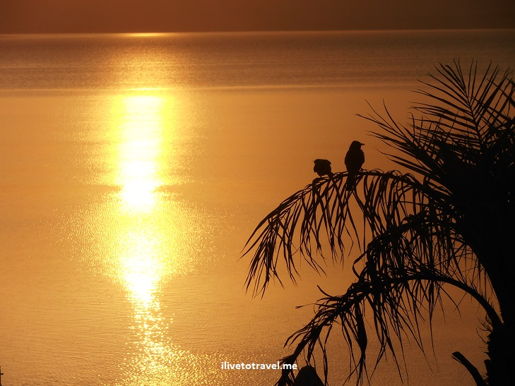 Sunset Dead Sea birds tree Jordan Canon EOS Rebel, photo