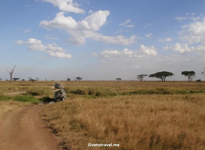 Safari, Serengeti, Tanzania, wildlife, animls, giraffe, outdoors, nature, photo, Olymmpus