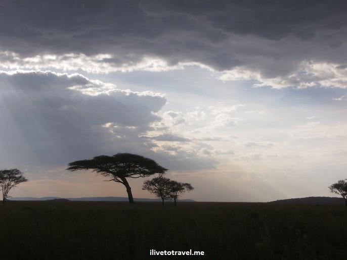 Safari, Serengeti, Tanzania, wildlife, animls, giraffe, outdoors, nature, photo, Olympus, sunset