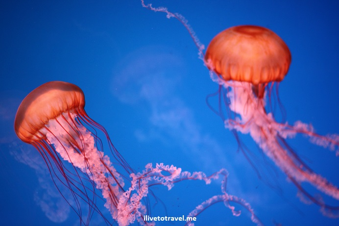 aquarium, Mall of America, Minneapolis, Minnesota, entertainment, shopping, travel, sea life, Canon EOS Rebel
